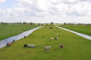 De polder